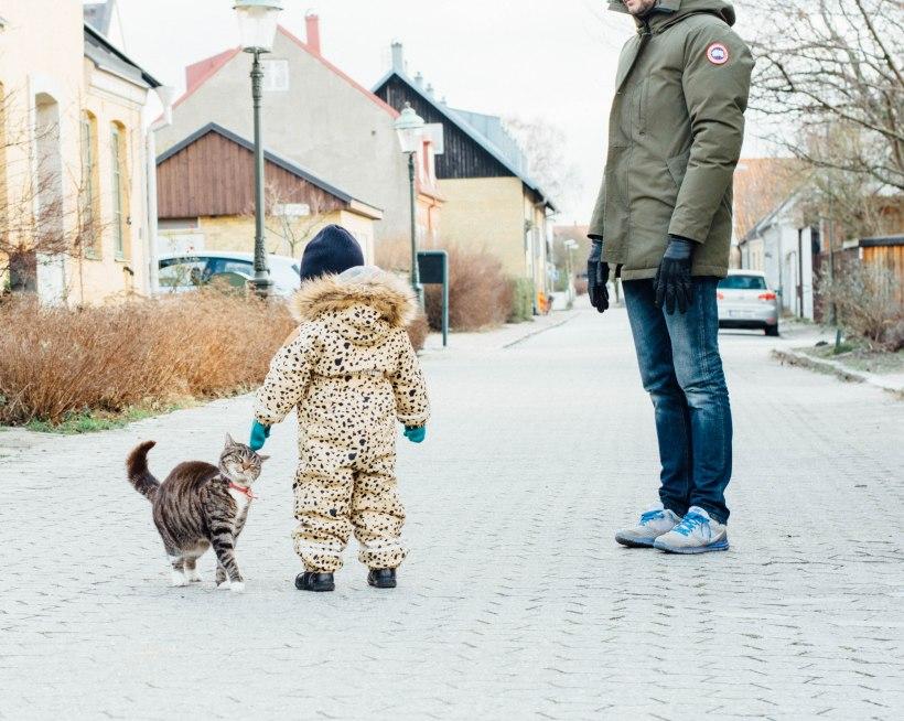 Katt (1 av 1)